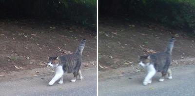 寄ってくる猫交差法立体画像