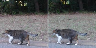 寄ってこない猫交差法立体画像
