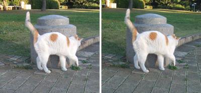探す猫交差法立体画像