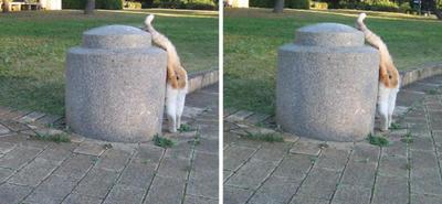 後ろを探す猫交差法立体画像