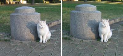 無かったことを悟った猫交差法立体画像
