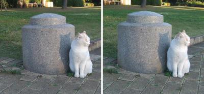ため息をつくネコ交差法立体画像