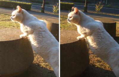 高台に上る猫交差法立体画像