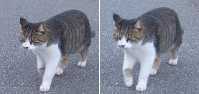 以前、寄ってこなかった猫交差法立体画像