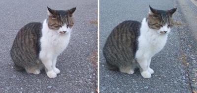アレ?猫交差法立体画像
