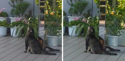 葉っぱを気にする猫 交差法立体画像