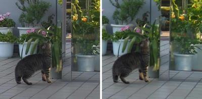 やっぱり葉っぱが気になる猫 交差法立体画像