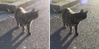 夕日にたそがれている猫 交差法立体画像