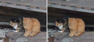 昭和枯れすすき な 猫  交差法立体画像