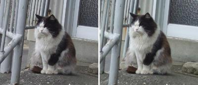 セカチュウのロケ地にいた猫 交差法立体画像