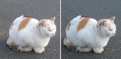 おもちゃっぽい猫交差法立体画像