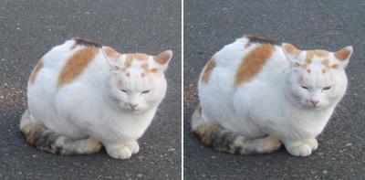 怒っている?猫交差法立体画像