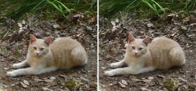 幸福の御猫様 交差法立体画像