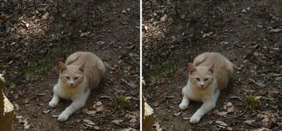 幸せの御猫様 交差法立体画像