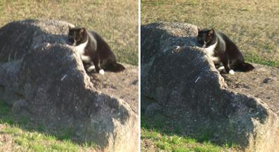 ソファーのようなもので休む猫交差法立体画像