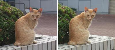 「んっ?」猫 交差法立体画像