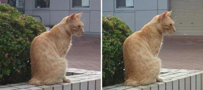 見ないフリする猫 交差法立体画像