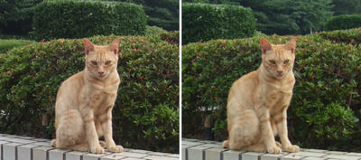 やっぱり「んっ?」猫 交差法立体画像