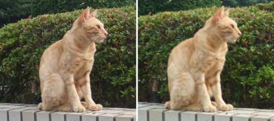 やっぱり見ないフリする猫 交差法立体画像