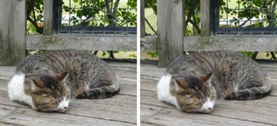 寝る猫平行法立体写真