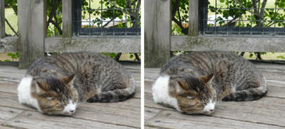 寝る猫交差法立体写真