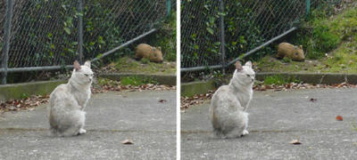 猫とイノシシ(ウリボウ)交差法3D写真