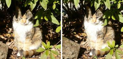 隠れる猫 平行法3D写真