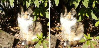 隠れる猫 交差法ステレオ写真