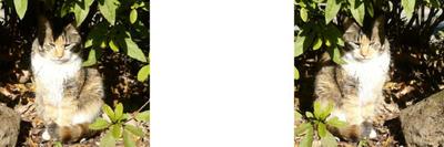 隠れる猫 ミラー法立体画像