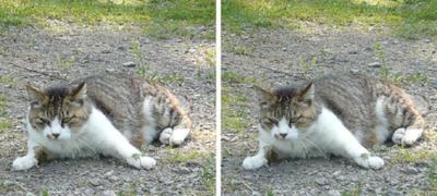 何かに驚く猫 平行法立体画像