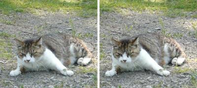 何かに驚く猫 交差法3D写真