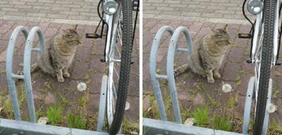 自転車が欲しそうな猫 平行法立体写真