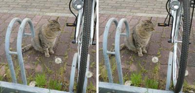 自転車が欲しそうな猫 交差法3D写真
