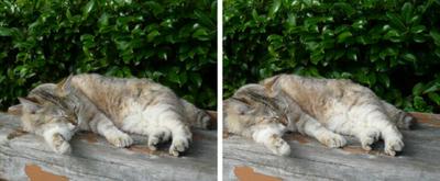 寝ている猫 交差法3D写真