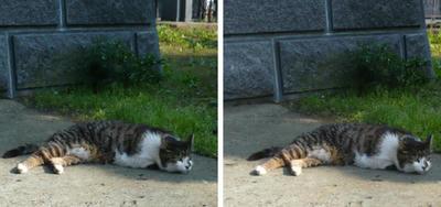 いじけるネコ 平行法立体画像