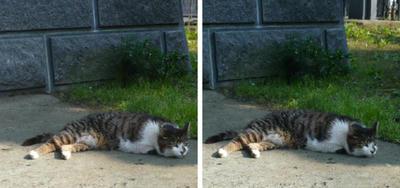 いじける猫 交差法3D写真