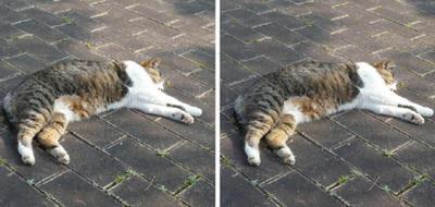 死んだフリする猫 平行法3D写真