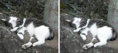 豪快な寝姿の猫 平行法3D写真