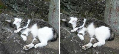 豪快な寝姿の猫 交差法ステレオ写真