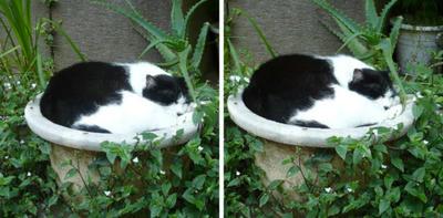 ネコ植木鉢 交差法3d立体写真