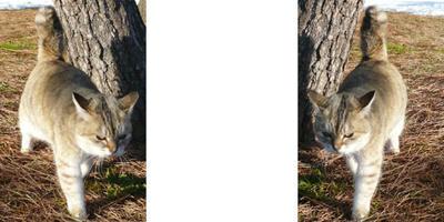 寒くても ミラー法猫の3Dステレオ写真