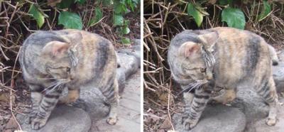 警戒しつつ寄ってくる猫 平行法3Dステレオ立体写真