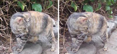 警戒しつつ寄ってくる猫 交差法3D立体ステレオ写真
