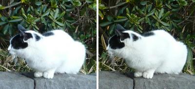 ぶち猫 平行法3D立体ステレオ写真