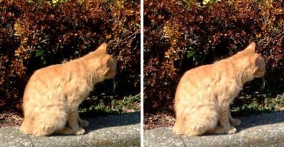 知らんぷりする猫 平行法3Dステレオ写真