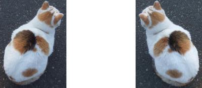 置物っぽい猫 ミラー法ステレオ3D写真