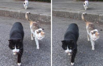 集会で集合する猫たち 平行法3Dステレオ立体写真