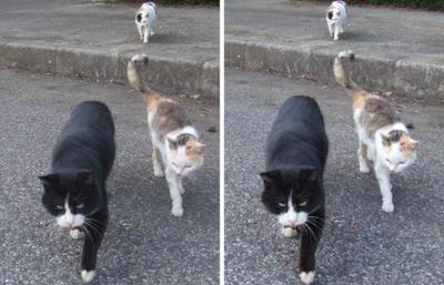 集会で集合する猫たち 交差法3Dステレオ立体視写真