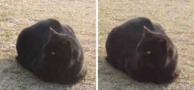 寒いので丸くなって日向ぼっこする猫 交差法ステレオ立体視3D写真