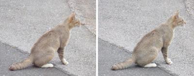 銀色っぽい毛並みの猫 平行法3Dステレオ立体写真